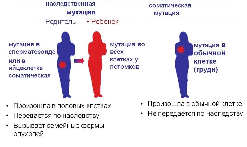 генотип
