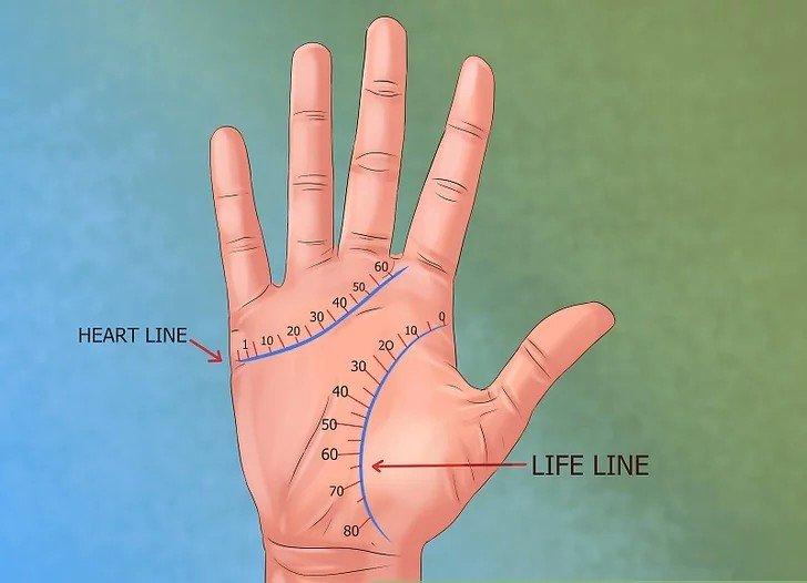 продолжительность жизни по линиям на руке
